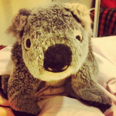 #cuddling with #clarence. #koala from #Australia. #sundaynightathome  (Taken with Instagram)