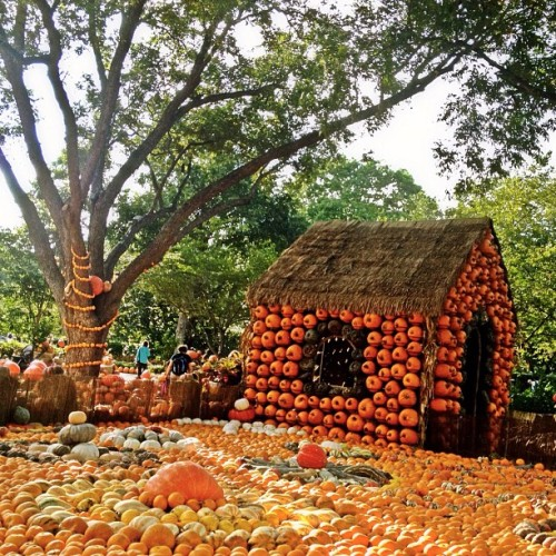 Pumpkin house #pumpkin #house #hut #arboretum #dallas #texas #iphonography #iphone4s #instagram #igfame #igers #instagramers #instagramhub #instamillion #photography #pictureoftheday #dailypic #picoftheday #befunky #garden #flowers (Taken with Instagram)