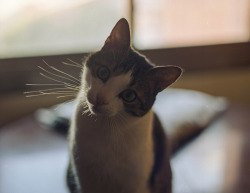 Another photo of a cat in the internet. Mr. Begbie by Ranhoca Sentimental on Flickr.