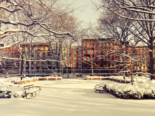 "Winter in Tompkins Square Park. East Village, New York City.  The clouds squeeze the last bit of light from the sun onto the city below.  It falls over trees and buildings: liquid promise spreading onto a landscape de-saturated by winter's icy breath.  In the wake of winter's gasping utterances, the sun uncovers the world that hides behind boisterous trees in summer.  And a smile spreads across the city's face for a moment: warm and golden hope spreading itself over the remains of the day.   —-  I have been going through older photos taken back when it snowed with great conviction two winters ago. This was taken in Tompkins Square Park in the East Village the morning after a blizzard.  —-  In case you missed it, I posted a video this past weekend of me talking about photography and New York City. If you ever wondered what it is like to see me talk about these sorts of things, you can view the video here:   Art:Seen: Vivienne Gucwa  —-  View this photo larger and on black on my Google Plus page  —-  Buy ""New York Winter - Tompkins Square Park - East Village"" Prints here, email me, or ask for help."
