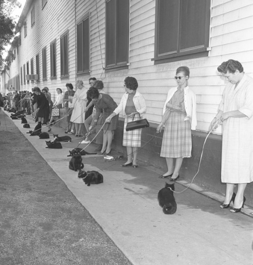 "Casting call for black cats for ""The Black Cat"" segment in Tales of Terror, 1961"