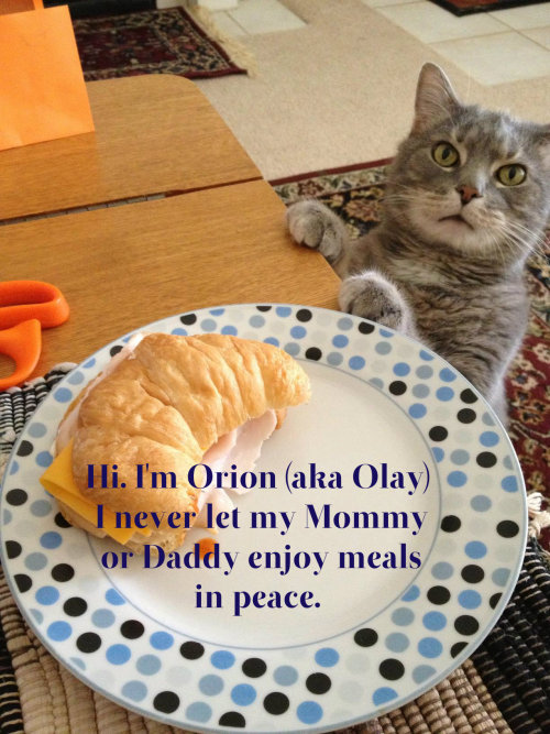 Just submitted this picture of my kitty to Cat Shaming.  FOLLOW THIS BLOG