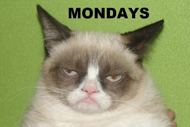 Tard seems to think every day is Monday.