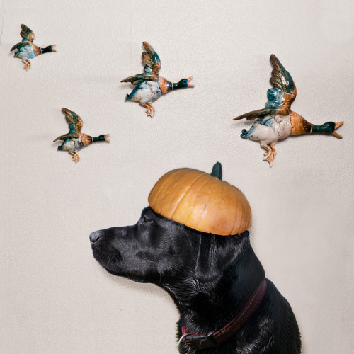 My dog Filby does Halloween by heather buckley