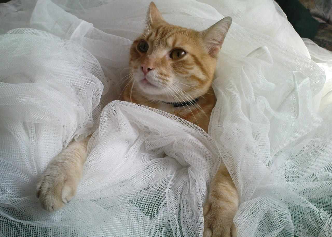 "catsbeaversandducks:  ""I can haz wedding now?"" Photo by ©Rudolph's Secret Diary"
