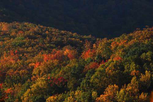 Fall colors in The Watauga Reserve. Cherokee National Forest, Tennessee, USA ©Van Miller