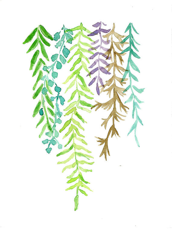 aplaceforart:  Ferns by TheJoyofColor