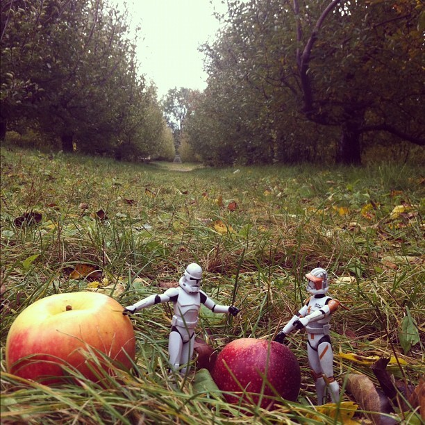 "George does October photo a day: ""landscape"" Apple Orchard Landscape. Troopers discussing who's apple is better. #octobergeorgethetropper #georgethetrooper  (Taken with Instagram)"