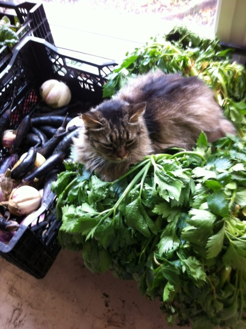 get out of there cat. you are not celery.