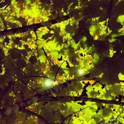 #tree #leaves #foliage #night #glow #fall #october #autumn #library #iphone #iphoneonly #evening #streetlight #light #shoals  (Taken with Instagram at Florence-Lauderdale Public Library)
