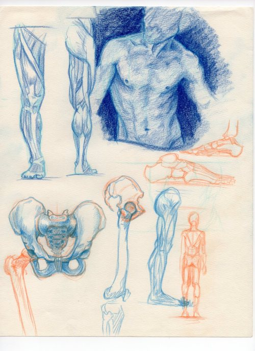 some anatomy sketches because my friend gave me some new colored pencils in exchange for a hat. Isn't friendship magical?