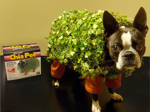 Pet costumes are one of those things that are never not awesome, but this one is perhaps especially clever and great. photo via cute overload