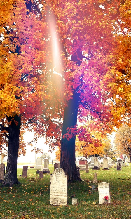 Cemetery in the fall