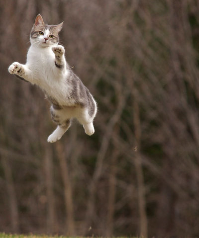 rurinacci:  Cats Get Airborne, We Get Photos: 10 Flying Super-Cats | Catster