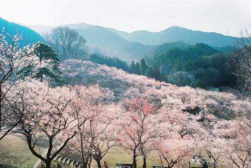 sleeplessjapan:  …. by merefflorescence on Flickr.