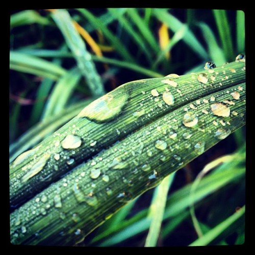 morning dew…  (Taken with Instagram at Regal Hamilton Commons Stadium 14)