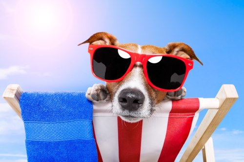 tripbucket:  Who likes to take their pooch on vacation? See our list of dog lover dreams