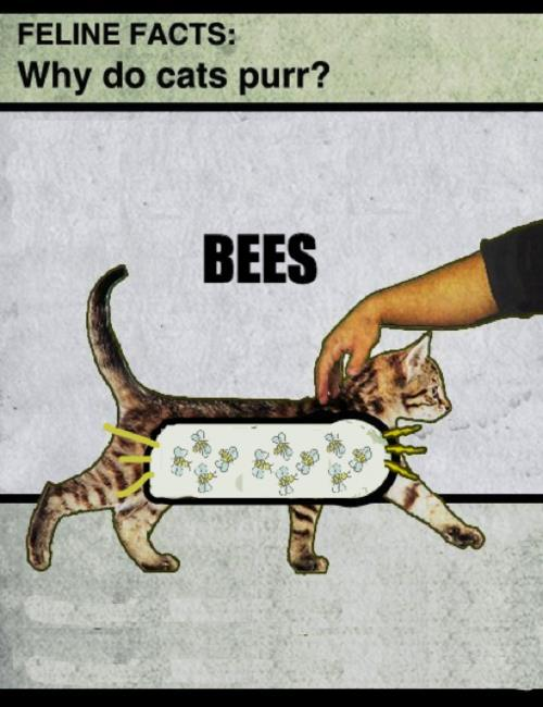 catsandgraffitis:  gossipfolk:  Science.   Oh  Well, now you know.