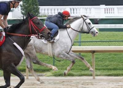 The gray Cozzetti works a bullet at Churchill Downs preparing for the 2012 Preakness Stakes (I).