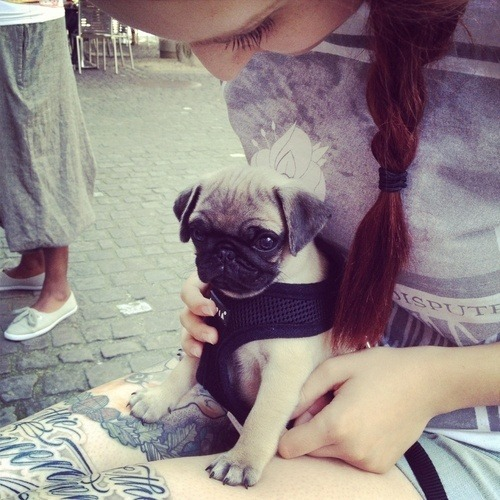 missin-u-all:  rosy-chanel:  omg too cute!!! ♡♡♡  more here ✿
