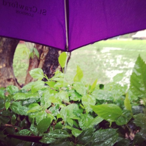 Canto bajo la lluvia 🎶 #rain #umbrella #waiting #plants (Tomada con Instagram)