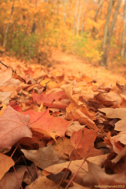 hollyjoyxlove:  Fallen leaves on the trail.