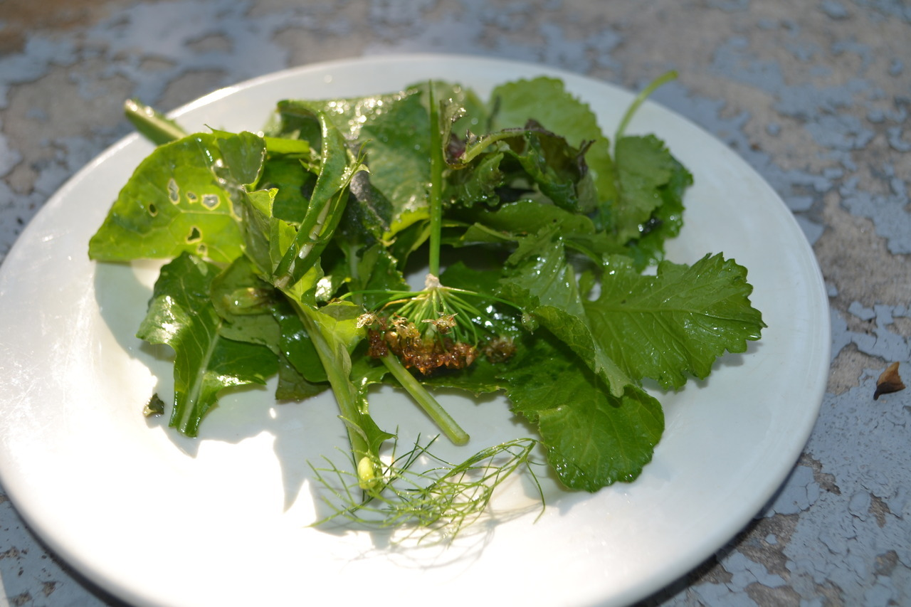 Fall Food Porn: Tender Mustard Green Salad with Fried Herbs (Sage and Onion Chives) Tossed in Mead (Honey Wine) Vinaigrette.  The honey wine was made on accident from my honey.