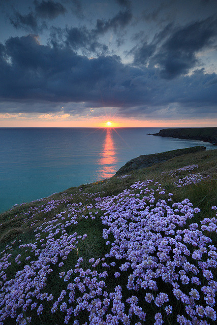 Sunset Thrift by markgeorgephotography.co.uk on Flickr.