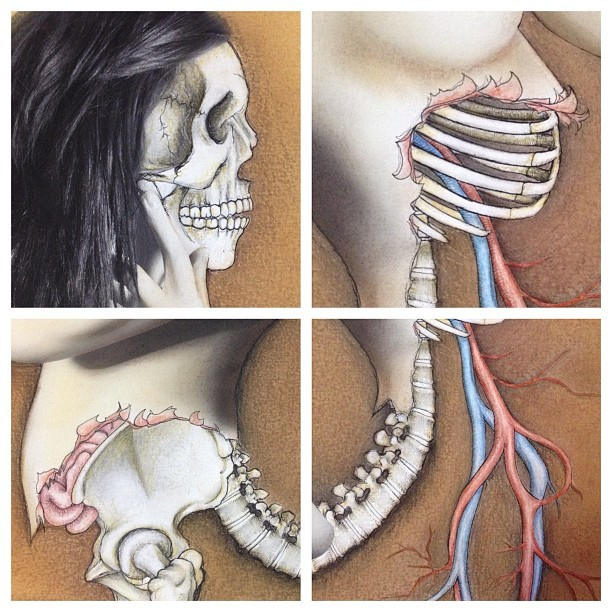 #detail shots of my #anatomy #photo #drawing. #art #fineart #anatomical #anatomicaldrawing #scientificillustration #illustration #mixedmedia #multimedia #model #chalk #pastel #photography #bones #body #nude #skull #spine #vertebrae #veins #ribs #hipbone #organs  (Taken with Instagram)