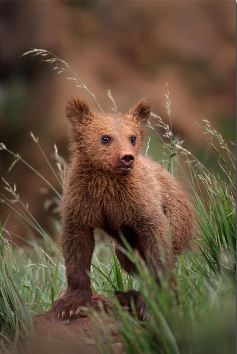 beautiful-wildlife:  Teddybear