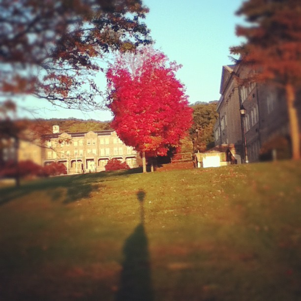 Love fall (Taken with Instagram)