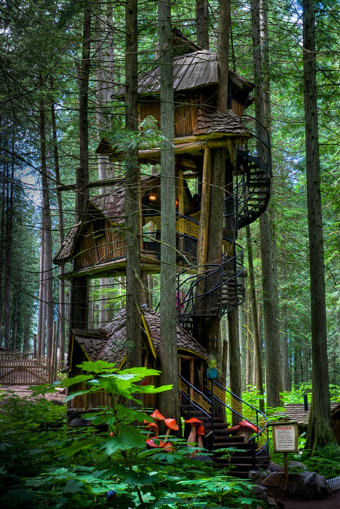 lori-rocks: Tallest Tree House. This is the tallest tree house in British Columbia near Revelstoke, BC. By Kieth Watson