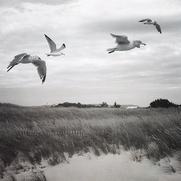 Black & white #seagulls // Edited with the Wood Camera app — available in the App Store.