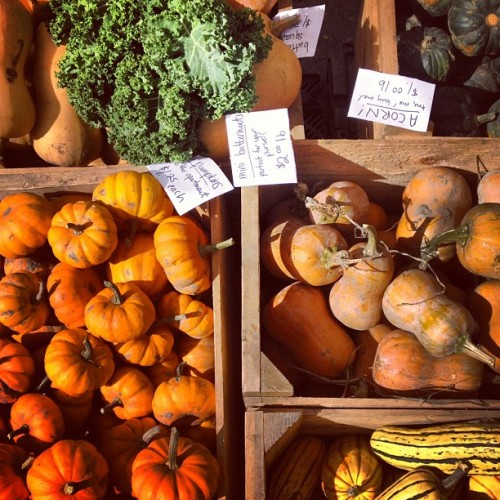 #greenmarket #unionsquare #fall #pumpkins #nyc  (at Union Square Greenmarket)