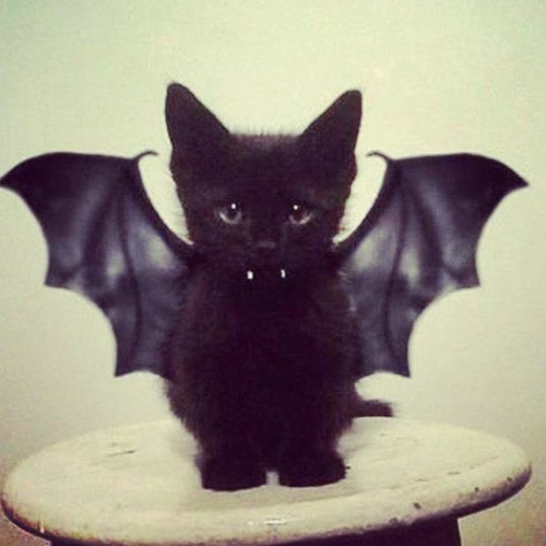 milkstudios:  14 Days Left Until Halloween So says Bat Cat.