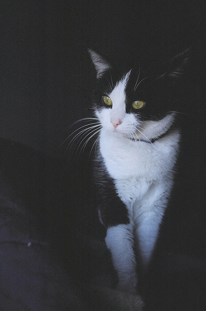 photogenicfelines:  (Liz Homola)