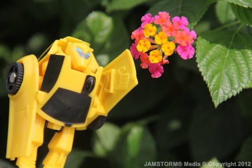 """Bee Flower Power."" Date: October 18, 2012 Theme: Kids Toy Meal Life! Where: Beside Magnolia Flavor House at Robinsons, Quezon City, Philippines Models: Bumblebee (Jollibee Kiddie Party: Transformers Animated), Jollibee What: Celebrate 1000th Toy Photography on Tumblr! Production Date: October 17, 2012 Camera: Canon EOS 60D / Kit: EF-S 18-135mm IS"