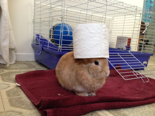 spookybaka:  stuffonmyrabbit:  Toilet Paper  i'm not over this yet i think it's my favorite one