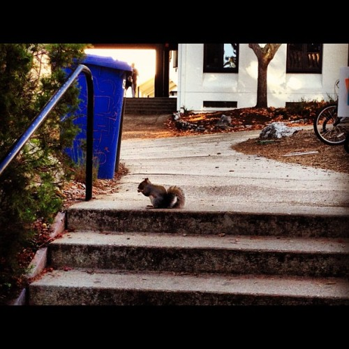 littlediana:  Mr. Squirrel. #squirrel #animal #ucsc #santacruz #college (at Crown College)