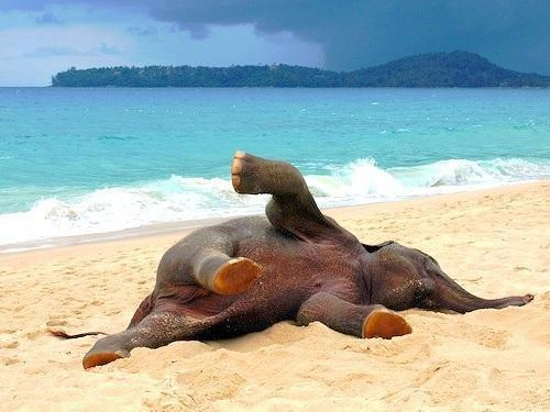 letsgodream:  Just my elephant acting funny. Follow www.letsgodream.tumblr.com if you don't hate elephants.