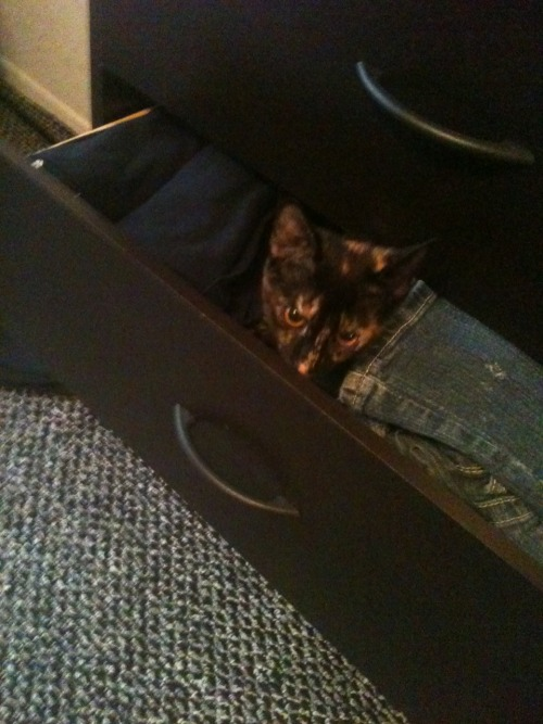 get out of there cat. i cannot wear you to school today.