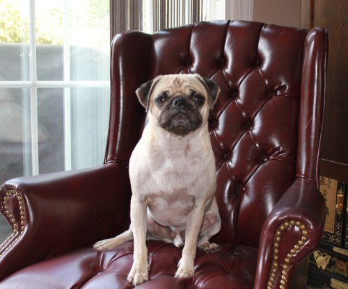 Welcome to Masterpug Theatre! (submitted by Steven!)