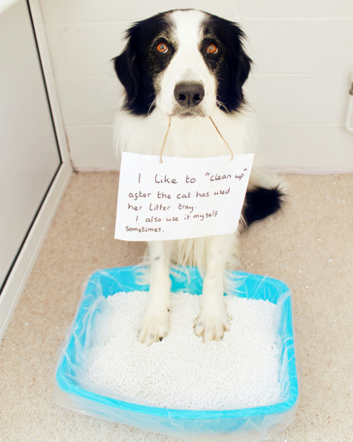 37/52 Dog Shaming by meg price on Flickr. — Confess.