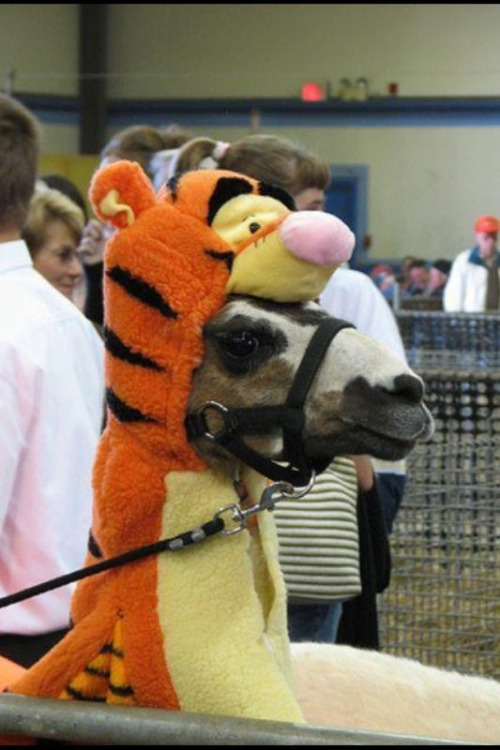 floket:  First thing that hit me was, why is Tigger eating a llama?