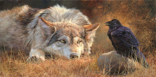 "steppen-wolf:  The raven is sometimes known as ""the wolf-bird."" Ravens, like many other animals, scavenge at wolf kills, but there's more to it than that. Both wolves and ravens have the ability to form social attachments and they seem to have evolved over many years to form these attachments with each other, to both species' benefit.There are a couple of theories as to why wolves and ravens end up at the same carcasses. One is that because ravens can fly, they are better at finding carcasses than wolves are. But they can't get to the food once they get there, because they can't open up the carcass. So they'll make a lot of noise, and then wolves will come and use their sharp teeth and strong jaws to make the food accessible not just to themselves, but also to the ravens.Ravens have also been observed circling a sick elk or moose and calling out, possibly alerting wolves to an easy kill. The other theory is that ravens respond to the howls of wolves preparing to hunt (and, for that matter, to human hunters shooting guns). They find out where the wolves are going and following. Both theories may be correct.Wolves and ravens also play. A raven will sneak up behind a wolf and yank its tail and the wolf will play back. Ravens sometimes respond to wolf howls with calls of their own, resulting in a concert of howls and calls.   Ravens and wolves working together may in fact be the BEST THING."
