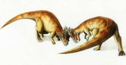 "Dome-headed Dinos Battled with Their Heads  Fossilized skulls of dome-headed dinosaurs retain signs of injuries from violent head butting or head shoving. The dinosaurs, known as pachycephalosaurs (meaning ""thick-headed lizards"") have long puzzled paleontologists, who wondered why the heads of these dinosaurs looked to have built-in football helmets.  read more…"