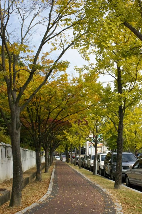 Quintessential scene of fall in Korea. I love this season.
