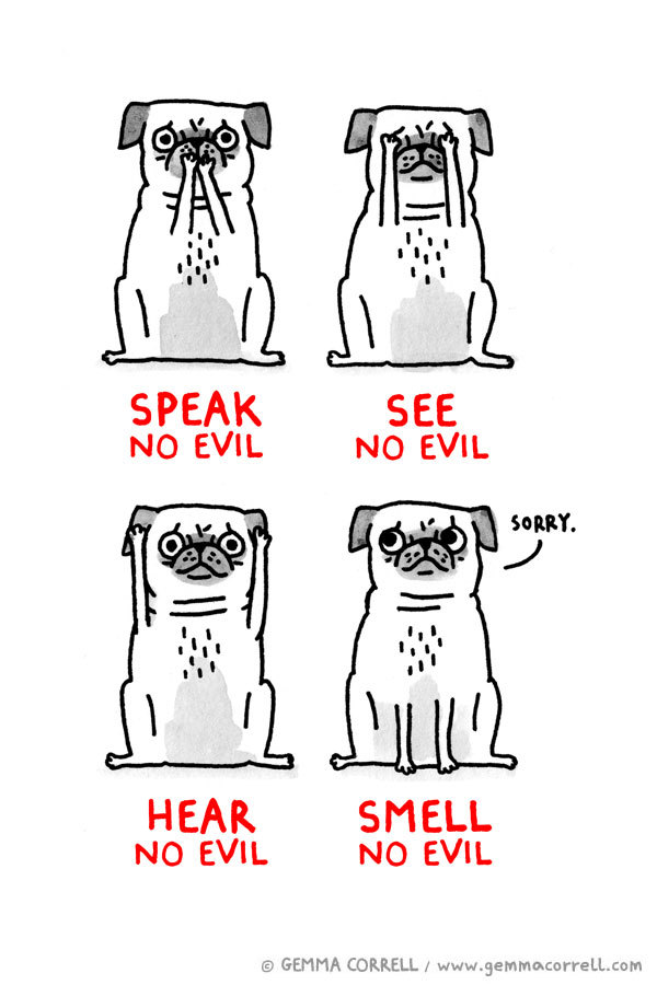 laughingsquid:  The Four Wise Pugs
