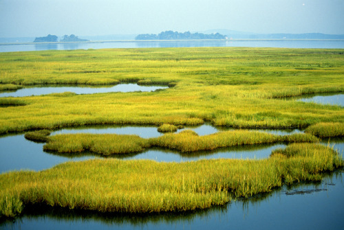 "mothernaturenetwork:  Photo of the day: Clean Water Act celebrates 40 years of water conservationOn Oct. 18, 1972, the United States passed the landmark Clean Water Act. Crafted with the goal of ensuring that all U.S. waters — including these coastal wetlands seen at the Parker River National Wildlife Refuge in Newburyport, Mass. — are ""fishable and swimmable,"" the ambitious act has seen its fair share of successes and shortcomings in the past 40 years. Before the CWA passed, only a third of all water in the country was safe for swimming and fishing."