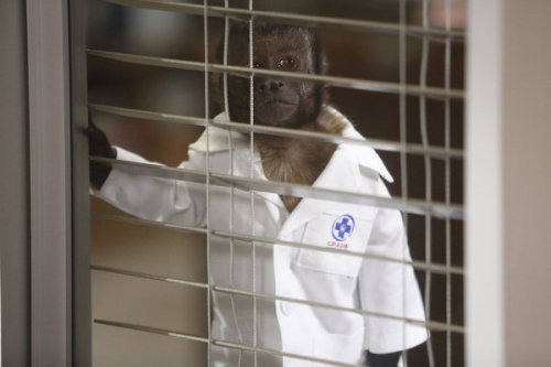 "NBC is replacing ""Animal Practice"" with ""Whitney."" I hope Crystal the Monkey is getting a lot of new offers right now."